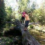 Trail Run Roseville 10km