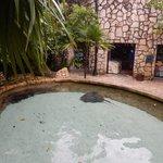 Бассейн со скатами