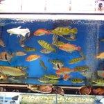 Lots of fish at Goldfish Street Market