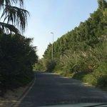 Driving into Al Barari
