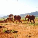 Safari sur 2 jours par organisé par Asshad