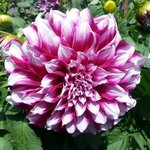 huge flower