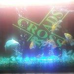 Aquarium at the reataurant