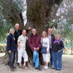 Largest Olive tree in Europe