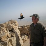 Me and a bird on Masada. A real pic.