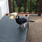 Hornbill at the hill villa deck chair