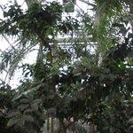 Botanic Gardens in December 2013