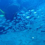 Best dive! Flamingo Beach, millions of fishes!