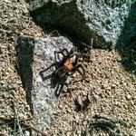 Una tarantula por el camino