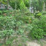 Le jardin tropical où sont dispersés les bungalows
