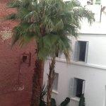 palmier dans le patio