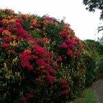 flower wall in gardens
