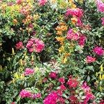 flowers in hotel garden