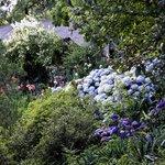 Part of Sumptuous Gardens