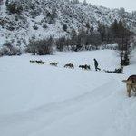Ballade en chiens de traineaux