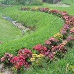 Um dos primeiros jardins.