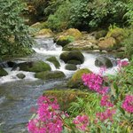 Local Walk Past Waterfalls