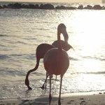 Isla privada - tiene playa familiar y para adultos