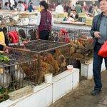 Yangshuo Market - Poultry