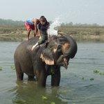 Elephant bathing right outside the hotel
