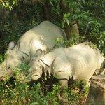 elephant back safari - rhino