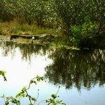 Sleepy alligators frequent the trails