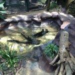 Missing freshwater crocodiles