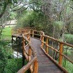 walk Way & Ponds