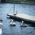 The gulls.