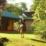 2 Pferdeschwänze in Harmonie - Ausritt am Morgen