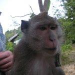 treetoptour monkey