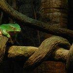 A sleepy frog.