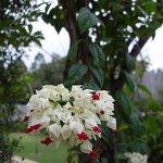 敷地内は花が咲き乱れメルヘンチック