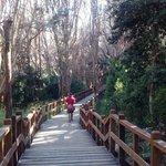 El bosque de Arrayanes. Se aprecian los ejemplares de mayor tamaño y su particular perfume