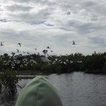 Levée d'oiseaux