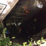 Vasche con i pesci rossi