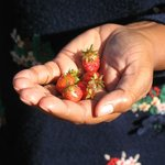 Fresh Strawberries..Never ever had such sweet fruit in life