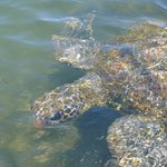 swimming with turtles - a pleasant drive away
