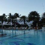 Palm Trees near the main pool
