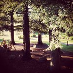 Redwoods outside our room