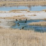 Ducks at Cochise Lake Birding Area