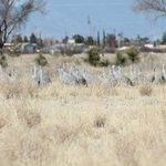 Cranes near golf course