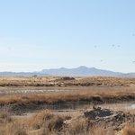 Cranes near Cochise Lake