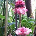 fleurs de porcelaine