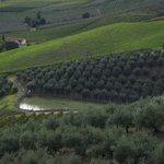 Scenery near Brisighella