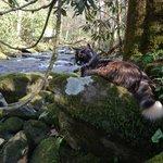 Moshi the millcat