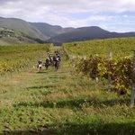 passeggiate a cavallo tra le vigne