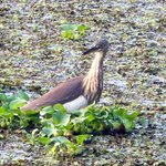 Backwater birds