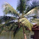 Prepare to eat coconuts