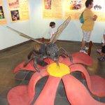 Honey Museum